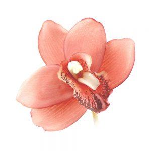orquidea luz coral