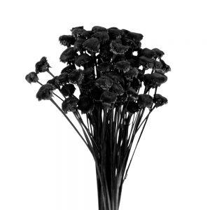 pali pala preservado negro