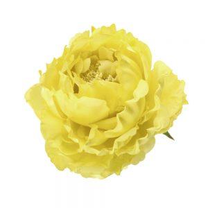 peonia adestes 14 cm amarillo