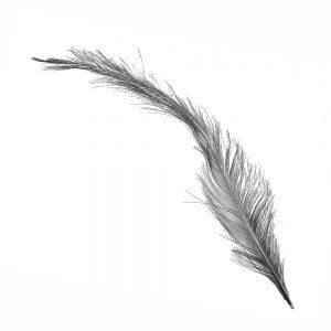 pluma gallo quemada negro