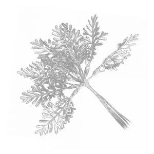 ramas metalizadas plata