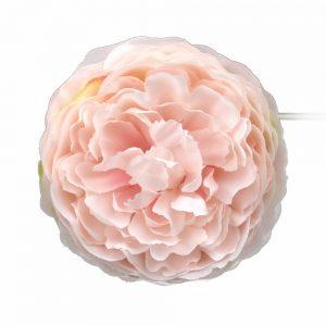 ranunculo 7 cm rosa