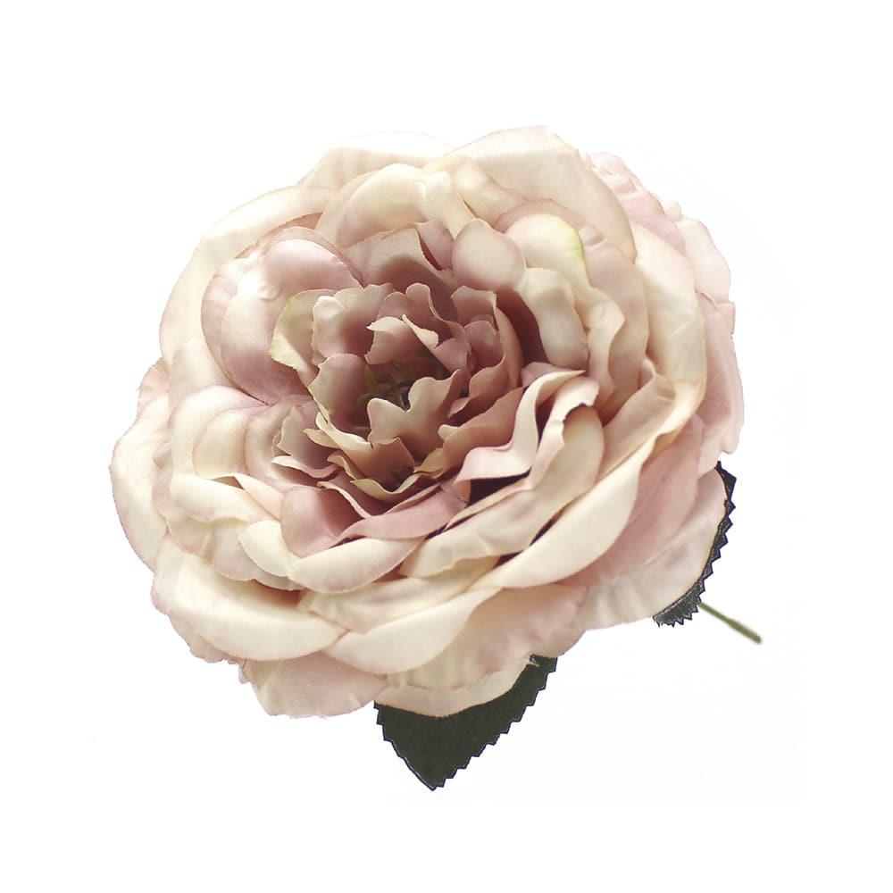 rosa evelyn rosa degradado