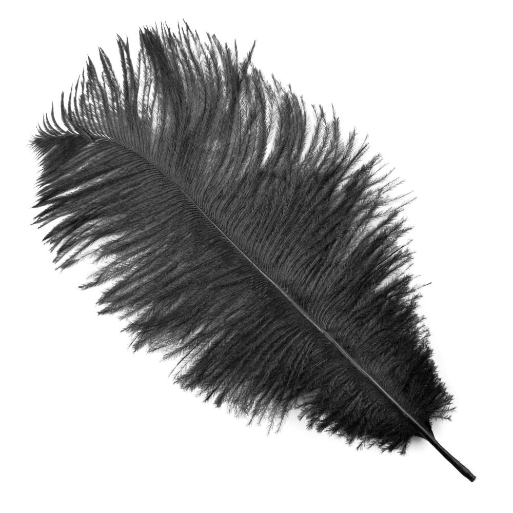 Plumas avestruz 15 20 cm negro